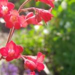 Les belles fleurs du site...