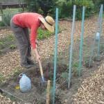 Sophie, jardinière de Compostri en pleine action !