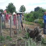 Visite à Roussette, Blanchette et Rougette, les poules de Compostri !